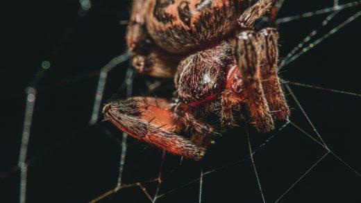 macro photography of orange barn spider on web